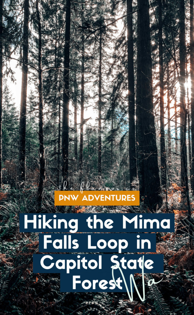 Get everything you need to know to hike Mima Falls Loop in Capitol State Forest, Washington!